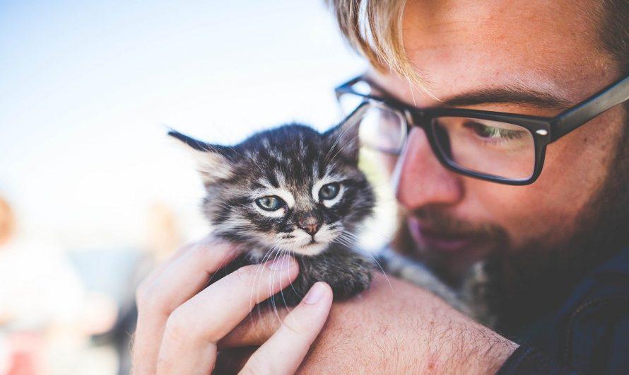 แมวไม่อ้อนเหมือนเดิม อยากให้แมวอ้อนเราต้องทำยังไง