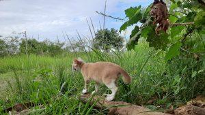 จุดเริ่มต้นของแมวจูเนียร์