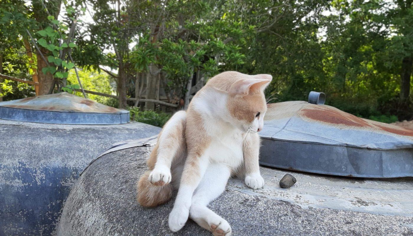 แมวขนร่วงเยอะ ทําไงดี เรื่องนี้ไม่ใช่ปัญหา