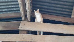 แมวอ๊วกอาหารเกิดจากอะไร ใครเรียกจูเนียร์