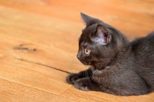 เชื้อราแมว สาเหตุเกิดจากเห็บหมัด