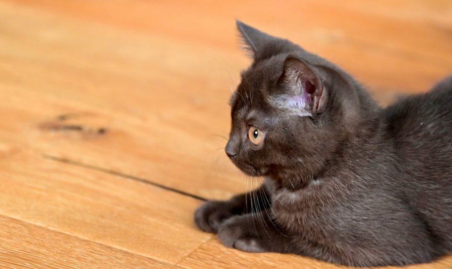 เชื้อราแมวเรื่องใกล้ตัวที่ไม่มีใครอยากเจอ