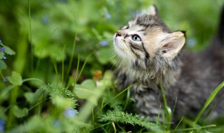 เชื้อราในแมว อาการ และการักษา