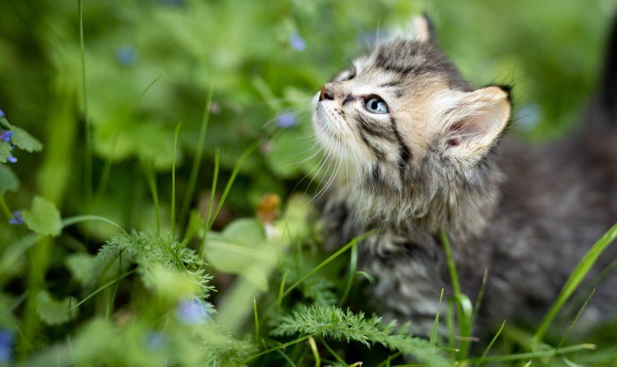 อาการเชื้อราในแมว และการักษา