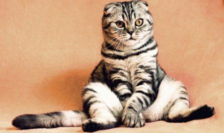 แมววิ่งมารอรับเจ้าของแปลกไหม