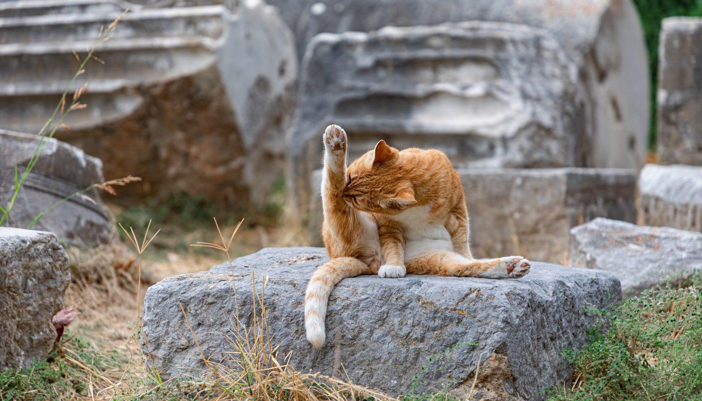วิธีแปรงขนแมว สำหรับเจ้าจูเนียร์
