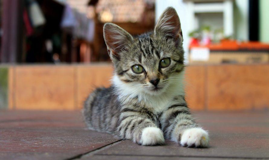 ทำไมหลังเล่นกับเราแมวต้องเลียขน
