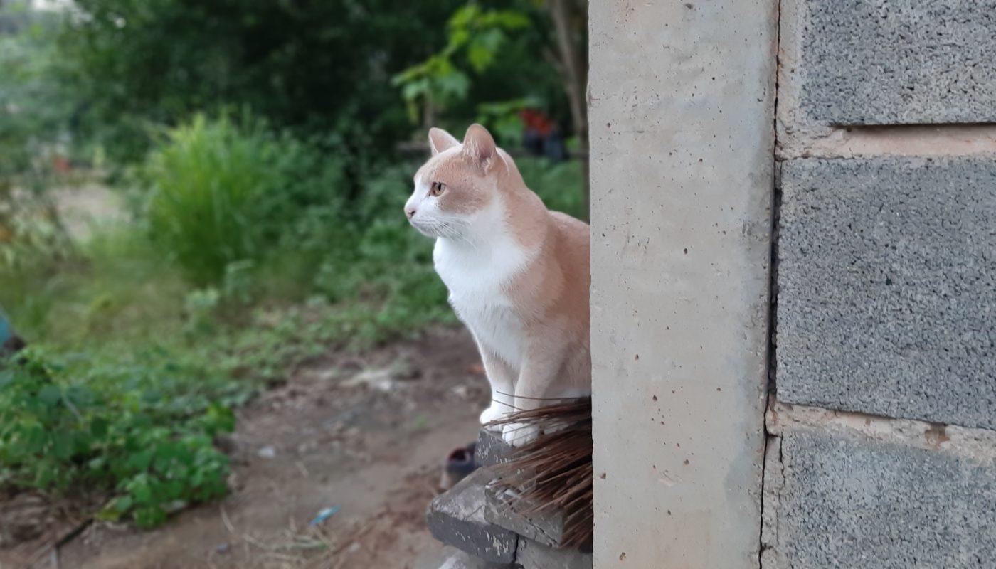 จงระวังแมวเลี้ยงระบบปิด
