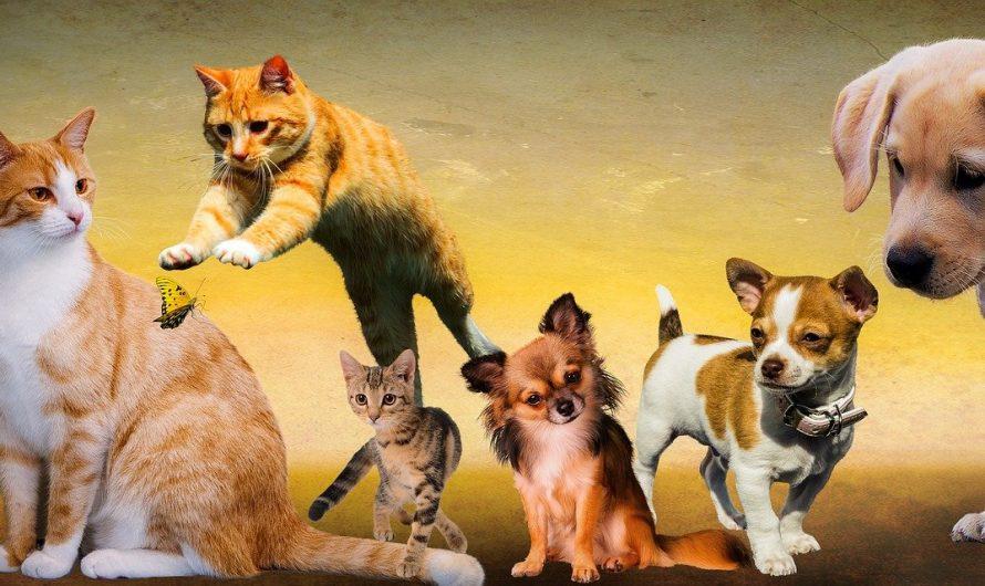พิษสุนัขบ้าโรคที่เกิดขึ้นได้ในแมว