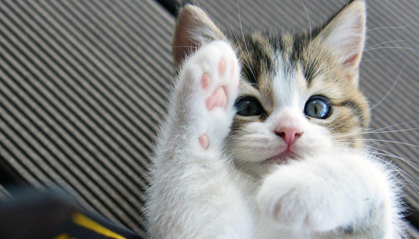 แมวมีพุงไว้ทำไม ถ้าไม่ใช่ให้เรา จก