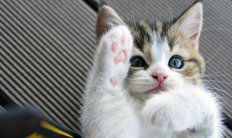 """แมวมีพุงไว้ทำไม ถ้าไม่ใช่ให้เรา """"จก"""""""