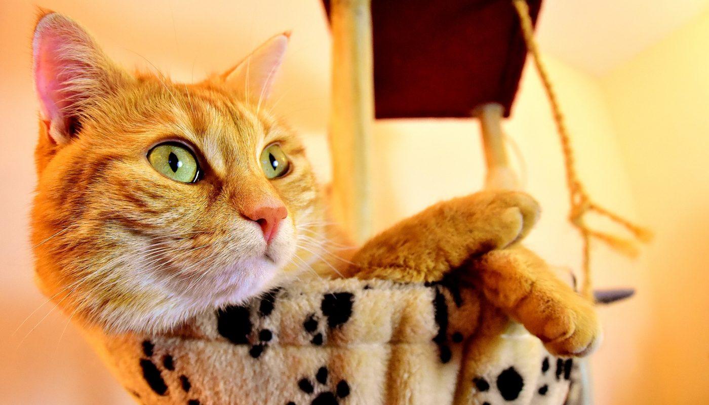 อาหารแมวยี่ห้อไหนดีและถูก