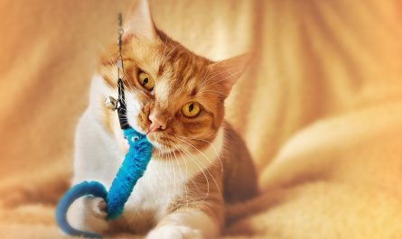 แมวชอบกินน้ำแบบไหน