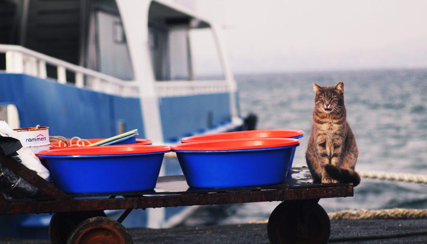 แมวฟังคนรู้เรื่องไหม