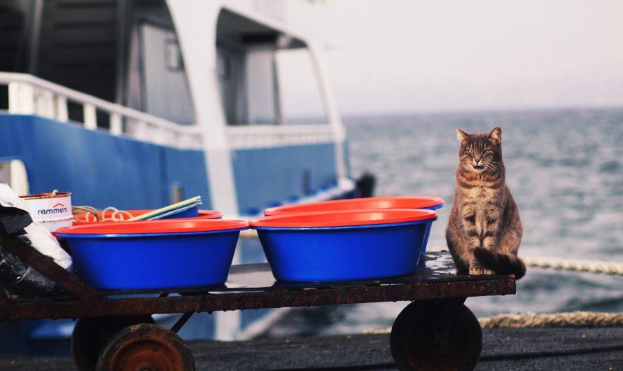 แมวฟังภาษาคนรู้เรื่องไหม