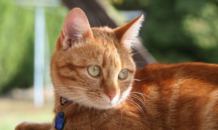 แมวใส่ปลอกคอครั้งแรก กันแมวจูเนียร์