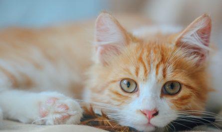 ทำไมแมวมันอุ่นขนาดนี้