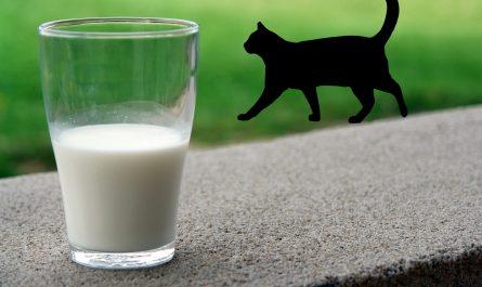 ทำไมแมวต้องกินนมแพะ