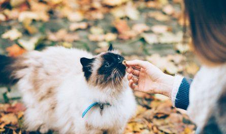 ขนมแมวเลีย อาหารว่างของแมว