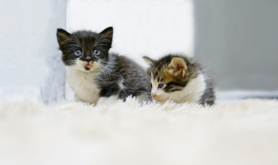 เมื่อผมเลี้ยงแมว 2 ตัว