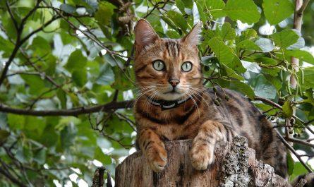 แมวตัวเมียหนีเที่ยวเหมือนกันไหม