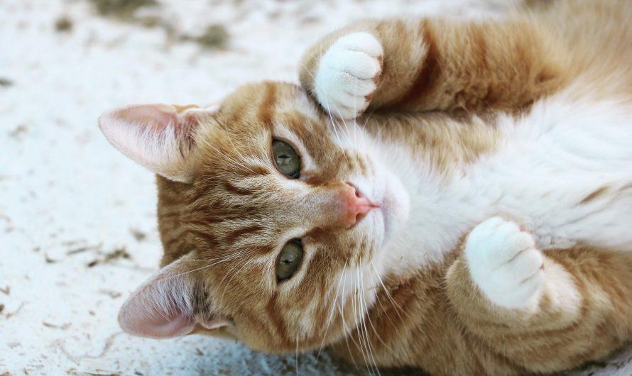 ขนมแมวเลียทำเองได้นะ สูตรง่าย