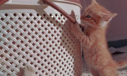 รับแมวมาเลี้ยงต้องเตรียมอะไรบ้าง