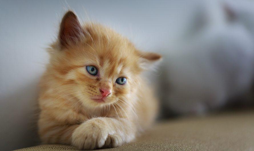 ลูกแมวหายออกจากบ้าน