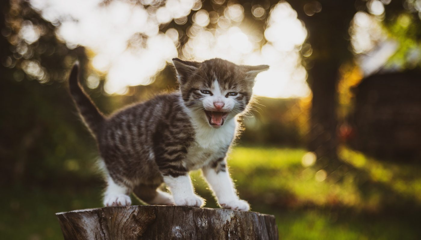 Care for a Kitten