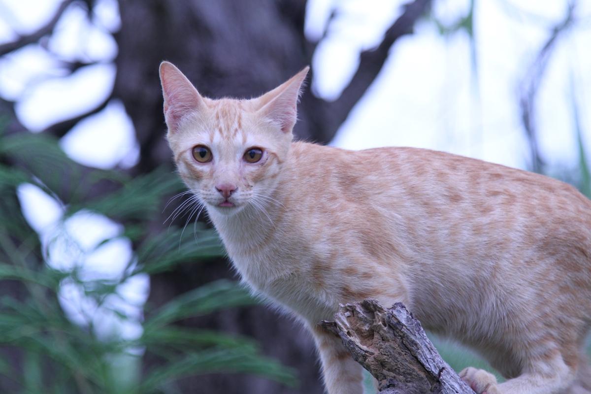 อาหารแมว maxima มีกี่สูตร