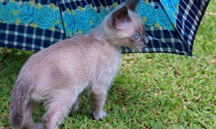 How to Feeding Kittens