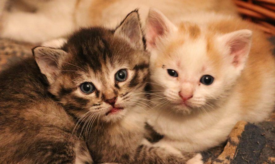 Types of Kittens