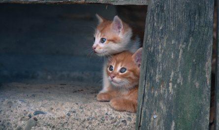 Cat Tidbits