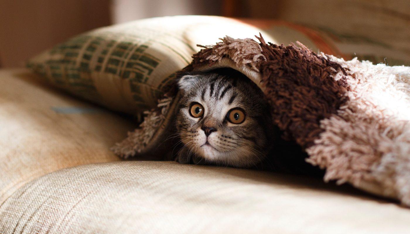 บ้านใครแมวปลุกตอนเช้าบ้างครับ