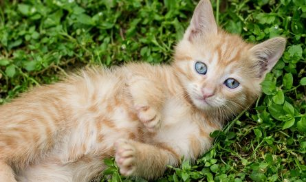 แมวส้มมันดื้อจริงไหม