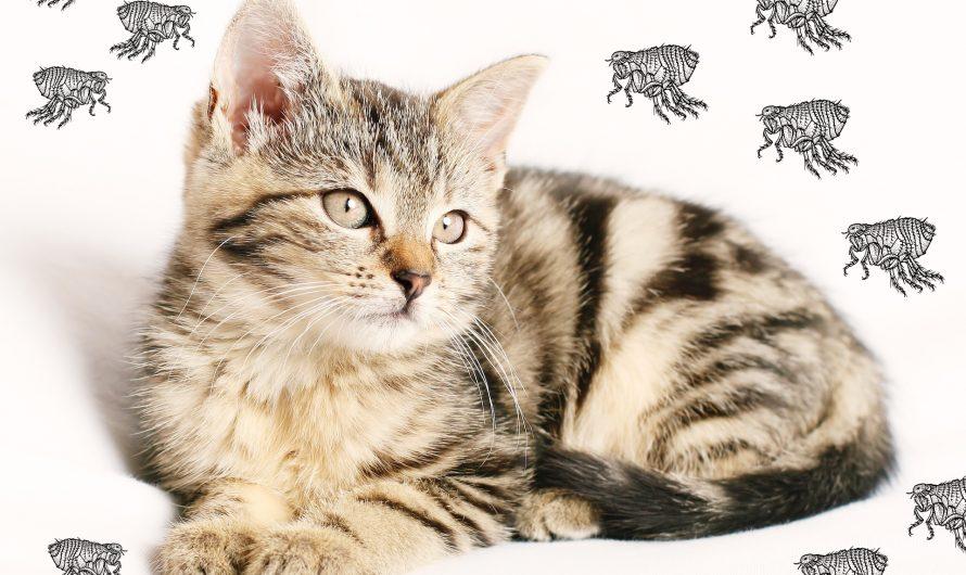 Fleas on cats treatment