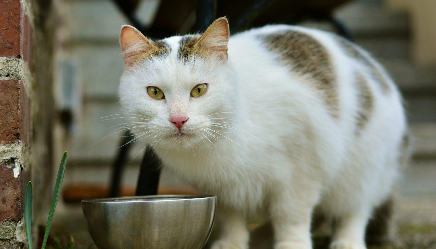 อาหารเปียกแมว ให้ยังไง