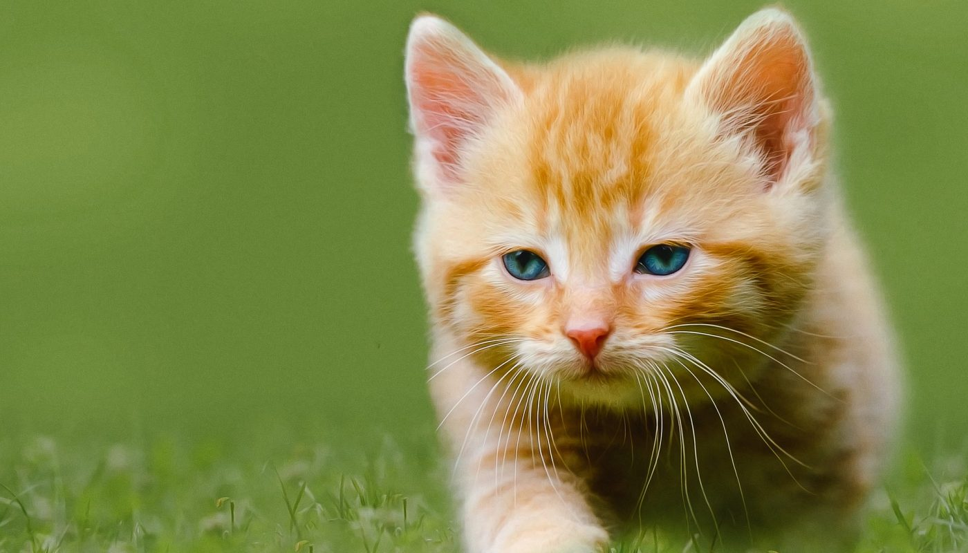 How to Adopt Kittens