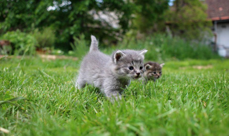 Where to Adopt Kittens